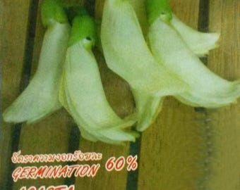 50 Heirloom Seeds Vegetable Hummingbrid Tree Agati Agasta Sesbania Grandiflora
