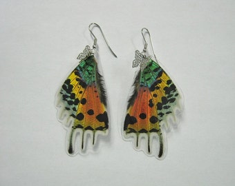 Butterfly Wing Earrings - Urania ripheus, Hindwings