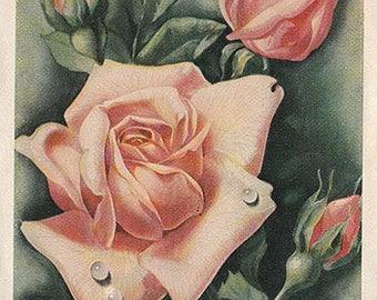 Vintage postcard Rose, vintage printable, instant download, postcard printable, image download, postcard download, digital postcard