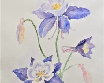 original watercolour Columbine flowers painting, watercolor flowers painting
