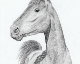 Horse, pencil