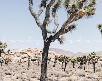 Joshua Tree Photograph, Fine Art Photography, California, USA, Road Trip, Travel Photography, Desert, West Coast, Color
