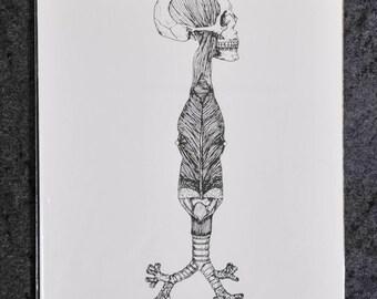 Skull - Bronchi