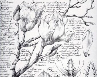 "Botanical Illustrations ""Magnolia"" | Download PDF A4"