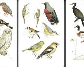 Vintage bird prints, ephemera, scrapbooking, wall art, book illustrations, nature illustrations, avian illustrations