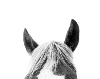 Horse Photography Print // Baby Gift // Equine Art // Nursery Wall Art // Animal Print // Black and White Photography // Mid Century Modern