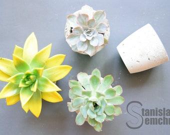 """Concrete pots """"Succulentus"""""""