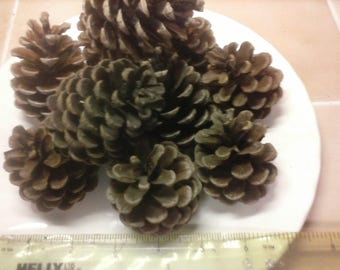 Box of 70-80 Natural pine cones / fir cones