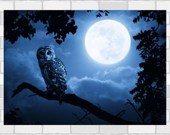 Owl illuminated by full moon poster print Wall Art in 4 sizes