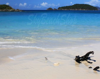 Driftwood and Piper, Caribbean Tropical Oversize Wall Art, St John USVI Large Beach Print Birdwatching Island Vacation Crystal Clear Water