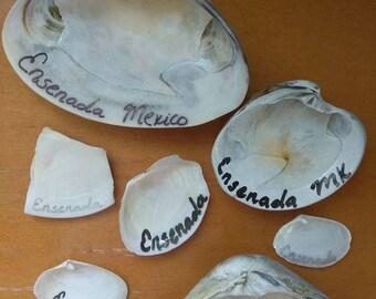 Custom shells from Mexico