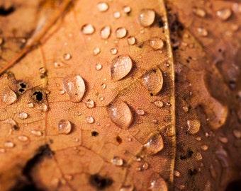 Fall of Autumn