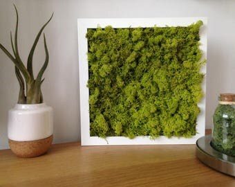 Plant table - plant frame - stabilized plant - terrarium