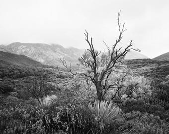 Black and White - Landscape Photography - CA