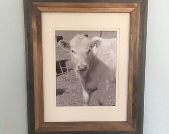 Rayna | Y-269-9 | Cow Photo | Farmhouse Style | Farmhouse Decor | Rustic Photo | Farm Animals