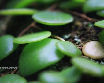 Macro Nature