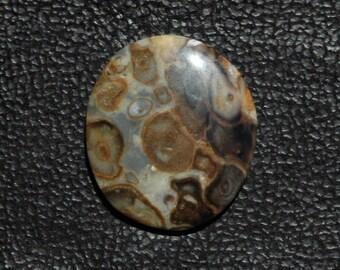 Fascinating Petrified Palm Cabochon C49