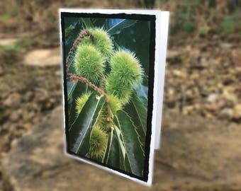 """Double Torn Edge folded greeting Card set of 5 (7x5"""")"""