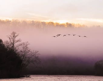 Flock of Birds over Chattahoochee River