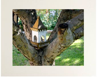 Birdhouse Photography Wall Art Print, Bird Abode Photo Matted to 11x14