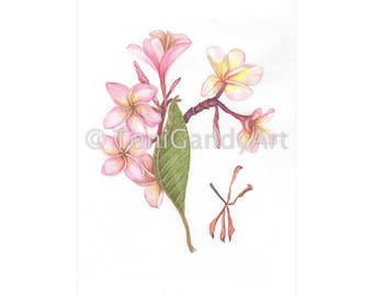 Frangipani | Greeting Card | x3
