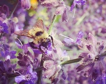 Flipped on Lavender