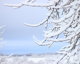 Snow everywhere!  - landscape - snowscape - branches -trees - ice -cold - nature - winter -digital -download