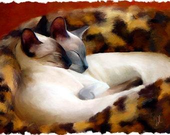 Sleeping Siamese Cat Print - Limited Edition Kitty Fine Art Print