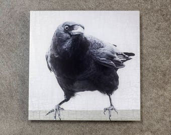 Poised and Handsome Crow - Fine Art Metallic Photo Print Bonded with Plexiglass, 12 x 12-in Square Transmount Print by June Hunter