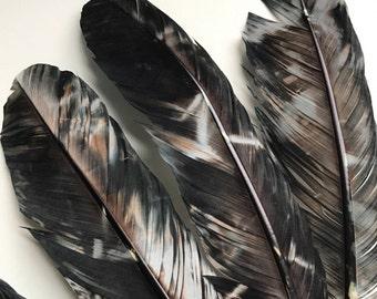 TURKEY QUILL, Black, brown snd beige, 4 pieces   /  Q - 6