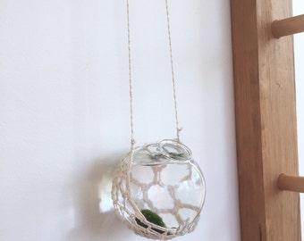 Marimo Moss Ball Hanging Planter