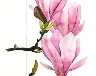 Pink, Purple, Green, Springtime Saucer Magnolia, Magnolias Watercolor by Clair Hartmann Original