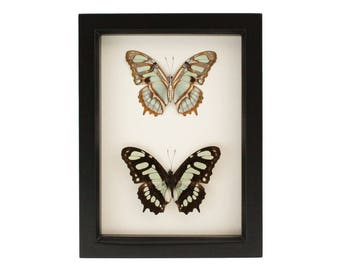Framed Green Butterfly Collection Malachite Display