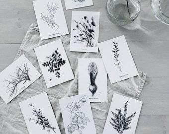 set- 10 postcards -black and white print watercolour art decor home ink graphic postcard