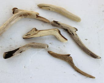 Driftwood Elbows , Drift Wood Pieces Art Supply , Driftwood Supplies , Natural Wood Craft  DE6