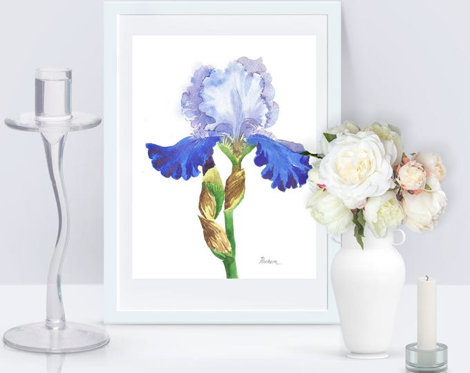 Blue White Iris (3) Watercolor Original, flower, floral, art, summer, blossom, botanical, bouquet, Iris, Blue, watercolor, gift for her
