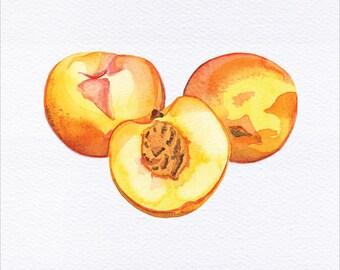 Peaches Unframed Watercolor Art Print