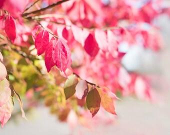 PINK fall autumn leaves- pink leaf-fall photography - autumn decor - autumn photo - Original fine art photography prints - FREE Shipping