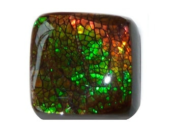 AMMOLITE  (32643) * * *  Multi-Fire Freeform!! - Mined in CANADA  - Million Year Old Fossalized Ammonite Shell Doublet Cab / Cabochon