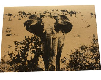 African Elephants assorted note card set of 3 on kraft
