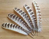 Hen Pheasant Wing Feathers - European Pheasant Feathers Unique Rare Beautiful Earthy Boho Gypsy Wild Bird Feathers Natural