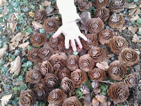 25 Super Cedar Roses Wooden Roses Deodar Cedar Pine Cone