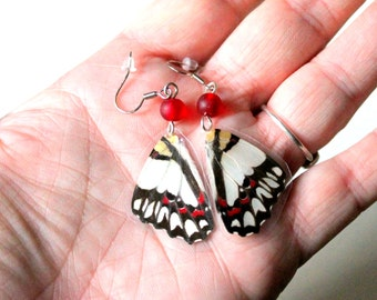 Real Butterfly Earrings, Nature Jewelry, Real Butterfly Wing Jewelry
