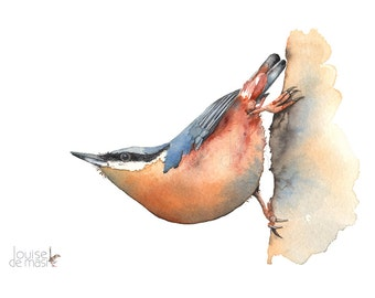 Nuthatch Print, Nuthatch watercolour painting print, Nuthatch watercolor painting, A4 size, N17817, Bird watercolour painting print