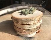Birch Tree Wood Slices Wedding Decor Lot of 25