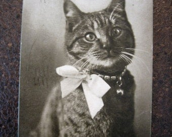 The Family Pet Post Card 1902