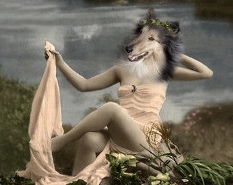 Heidi, Collie Dog Print, Anthropomorphic, Collie Art, Whimsical Dog Art, Photo Collage, Weird Art, Summer Art, Quirky Artwork, Animal Photo