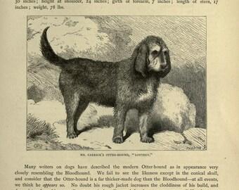 OTTER HOUND Dog ANTIQUE Chromolithograph Dog Print 1881 Vero Shaw Cassells Company Christmas Thanksgiving Birthday hound dog gift