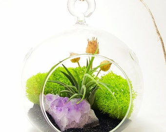 Air Plant Terrarium Kit with Purple Amethyst Crystal / Midnight Forest  / Teardrop, Round or Both / Free Shipping