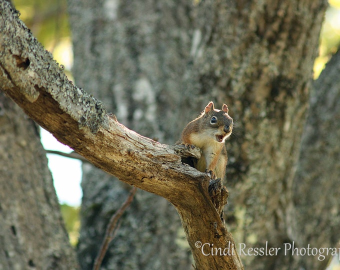 Brown Squirrel, Photography, Animal Photography, Nature Photography